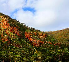 At Morialta Falls by Cherie Vivar