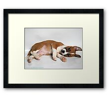 Just Chillin Bow Framed Print