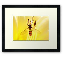 fly on yellow Framed Print
