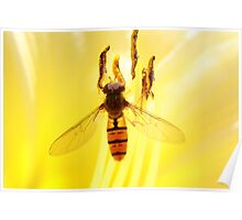 fly on yellow Poster