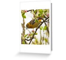 Female oriole Greeting Card