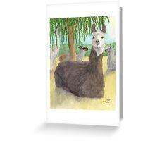 Llamas Lounging Farm Animal Pets Art Cathy Peek Greeting Card