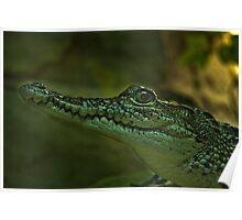 Morelet's Crocodile Poster