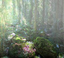 Dorrigo National Park by Matthew Jones