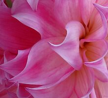 Dahlia macro madness by MarianBendeth