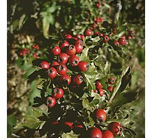 Berries Photographic Print
