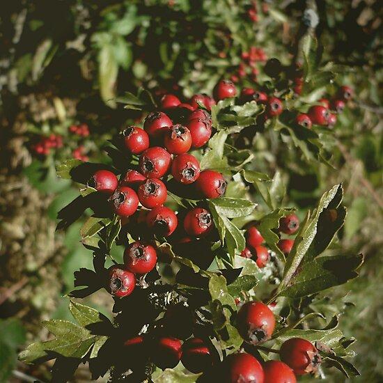 Berries by Jess Meacham