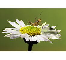 Mantis and droplet Photographic Print