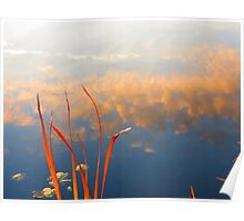Reeds and Clouds Poster