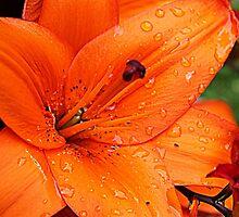Orange Lily by JordynShayPhoto