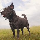 Wet dog by pahit