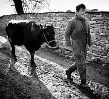 Cow on a lead by Alexander Caminada