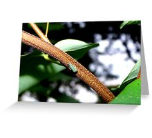 Little Bug on a Catalpa Tree Branch. Greeting Card