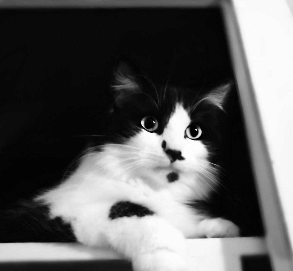 Black and White by vic321