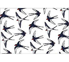 Swallow pattern Photographic Print