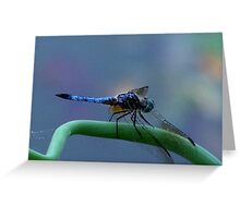 Dragonfly on a Green Onion Greeting Card
