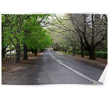 THE AVENUE, MOUNT WILSON,  NSW. Poster