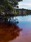 Lake Ainsworth, early morning, No. 1 by Odille Esmonde-Morgan
