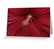 Crimson delight Greeting Card