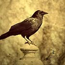 Rustic Crow by gothicolors