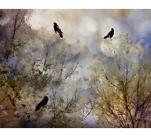 Crow bling Photographic Print