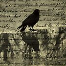 Crow Collage by gothicolors
