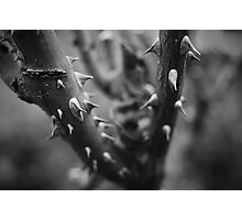 Thorns Photographic Print