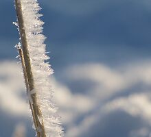 Icy Grass by Kathi Arnell