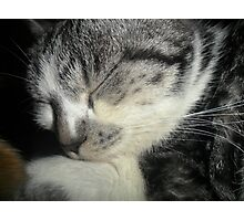 My sleeping cat Photographic Print