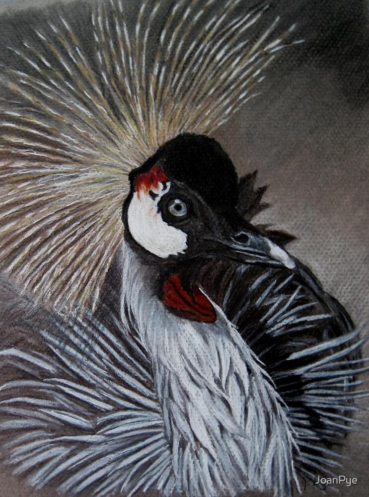 Grey Crested Crane by JoanPye