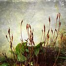 Wintry Weeds 1...........................Most Products by Fara