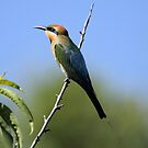 Rainbow Bee-eater ... Look to the sky 2 by Kerryn Ryan, Mosaic Avenues