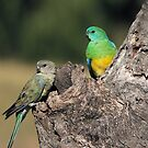 Red-rumped Parrot ... Mrs and Mr by Kerryn Ryan, Mosaic Avenues