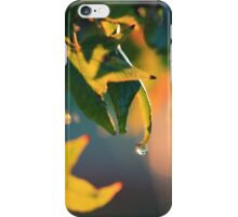 Dew drop on Autumn Leaves iPhone Case/Skin
