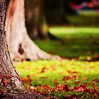 WITH YOUR SLENDER FINGERS YOU COLLECT AUTUMN LEAVES -IN HOPE YOU FIND LAST SUMMER by ARIANA1985
