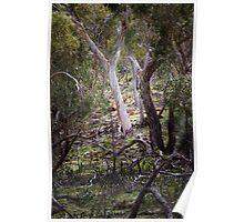 Forest near Tilwinda Falls Poster