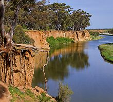 Living on the edge - Werribee River by Hans Kawitzki