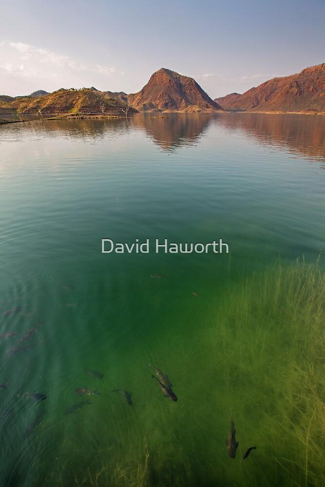 Aqua Argyle by David Haworth