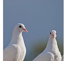 Fantailed Doves Photographic Print