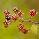 Brambles by M.S. Photography & Art