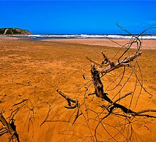 Sandy Red Beach with Branch (HDR) by Kuzeytac