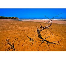 Sandy Red Beach with Branch (HDR) Photographic Print