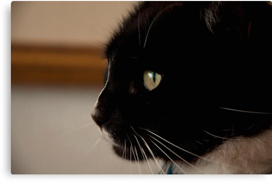 Side view kitty! by Maisie Sinclair