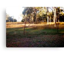 Little Kangaroos at  Mums' Gate Canvas Print