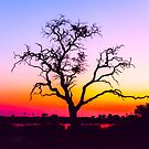 African Tree At Sunset by Graham Prentice