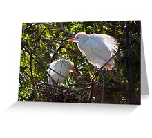 Young Egrets Greeting Card