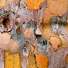 Nature's Quilt by Anne  McGinn