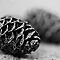 Pine Cones ~ Challenge Accepted!