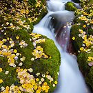 Boulder Brook, Rocky Mountain National Park by Ryan Wright