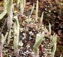 Lichen by Jess Meacham